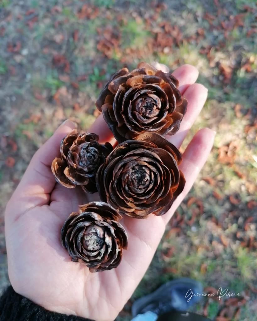 Rose di legno ai Laghi di Revine